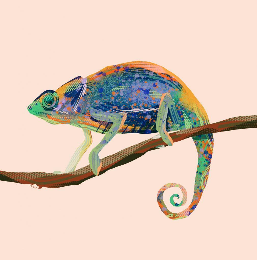 Detaillierte Illustration eines Chamäleon auf aprikotfarbenem Hintergrund.